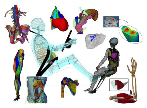 Etude de la biomécanique du corps humain
