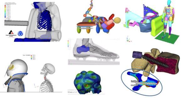 Simulations biomécaniques